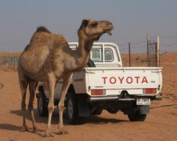 Toyota снова первая по продажам